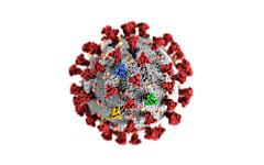 Schnelle Diagnostik von SARS-CoV-2 Mutationen