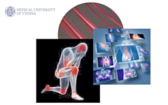 Joint Meeting on Vascular Biology, Inflammation and Thrombosis