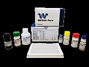 WANTAI SARS-CoV-2 IgG Elisa Kit (Quantitative) CE IVD